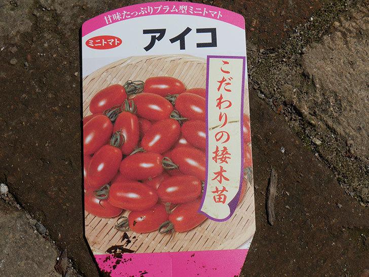 ミニトマトの苗アイコ3株をホームズで買って来た。2021年-009.jpg