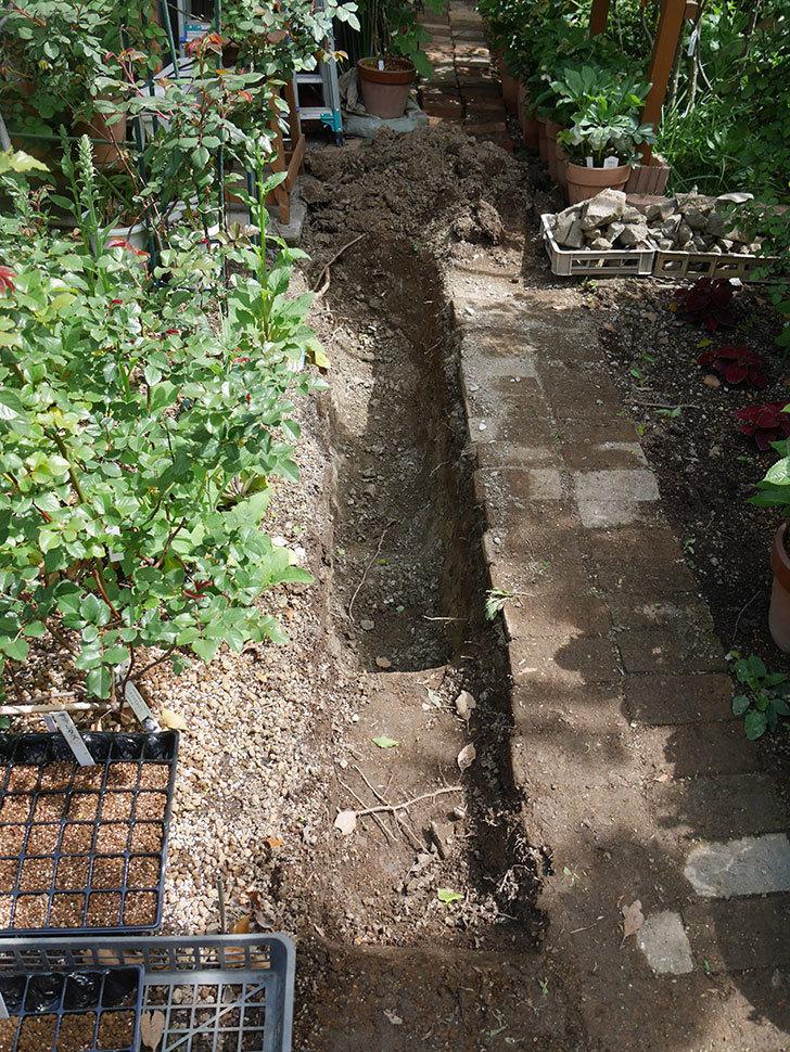 ミニトマトを地植えするために穴を30cmぐらい掘った。2020年-11.jpg