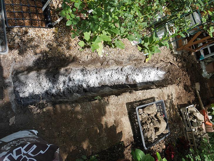 ミニトマトを地植えするために穴を30cmぐらい掘った。2020年-14.jpg