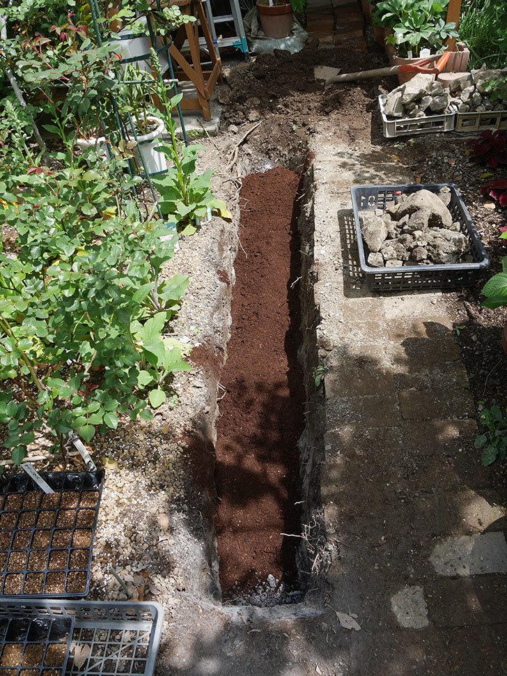 ミニトマトを地植えするために穴を30cmぐらい掘った。2020年-15.jpg
