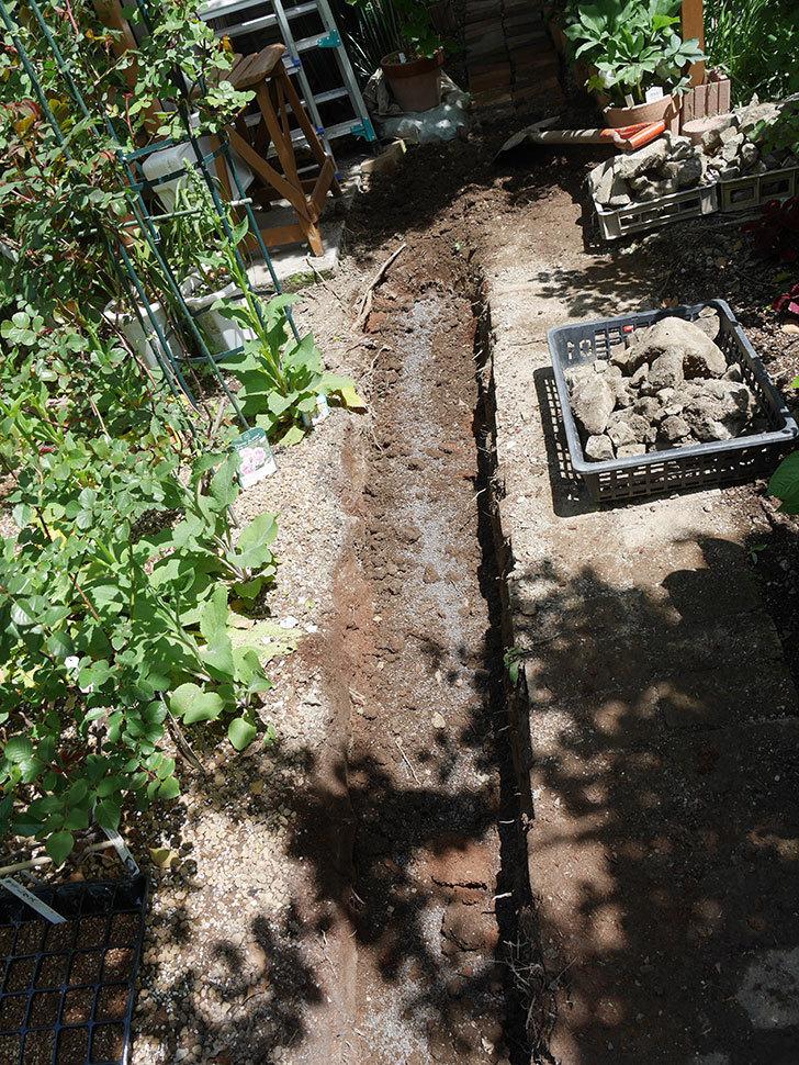 ミニトマトを地植えするために穴を30cmぐらい掘った。2020年-16.jpg