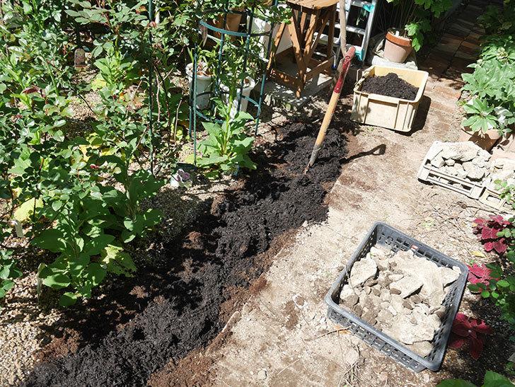ミニトマトを地植えするために穴を30cmぐらい掘った。2020年-17.jpg