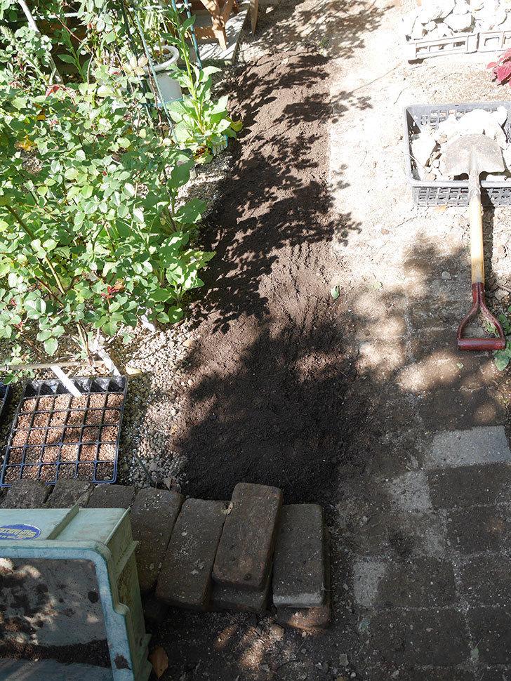 ミニトマトを地植えするために穴を30cmぐらい掘った。2020年-18.jpg