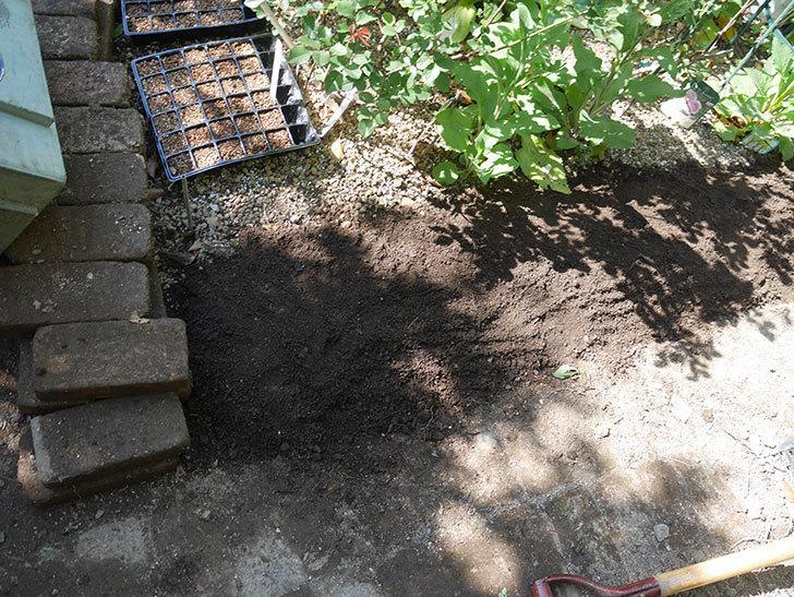 ミニトマトを地植えするために穴を30cmぐらい掘った。2020年-19.jpg