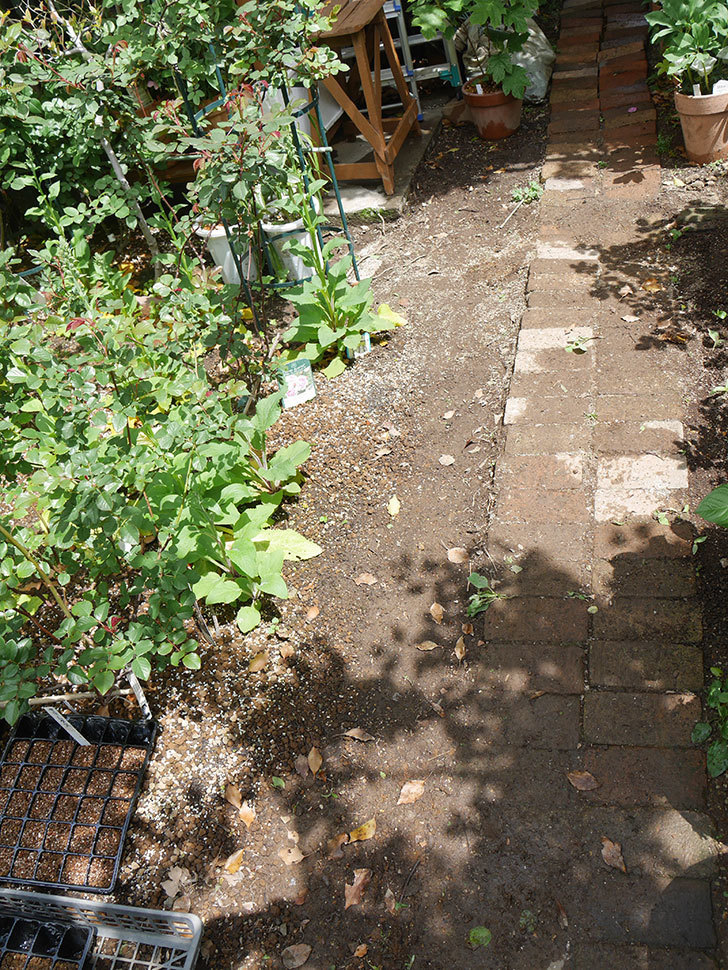 ミニトマトを地植えするために穴を30cmぐらい掘った。2020年-2.jpg
