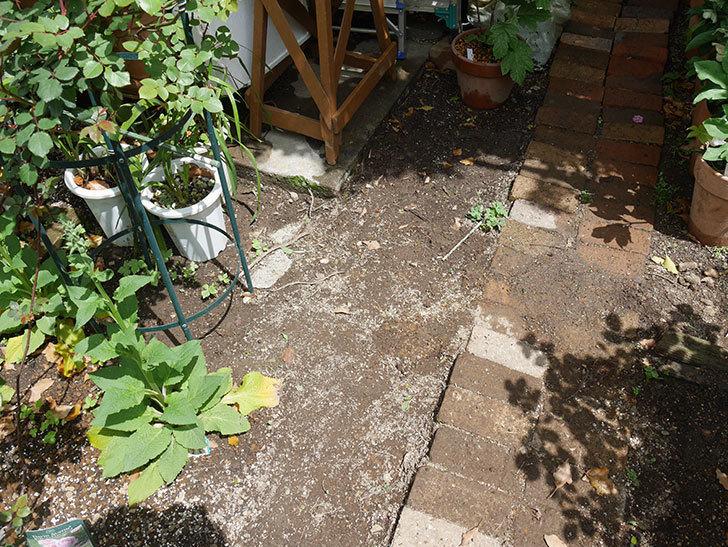 ミニトマトを地植えするために穴を30cmぐらい掘った。2020年-3.jpg