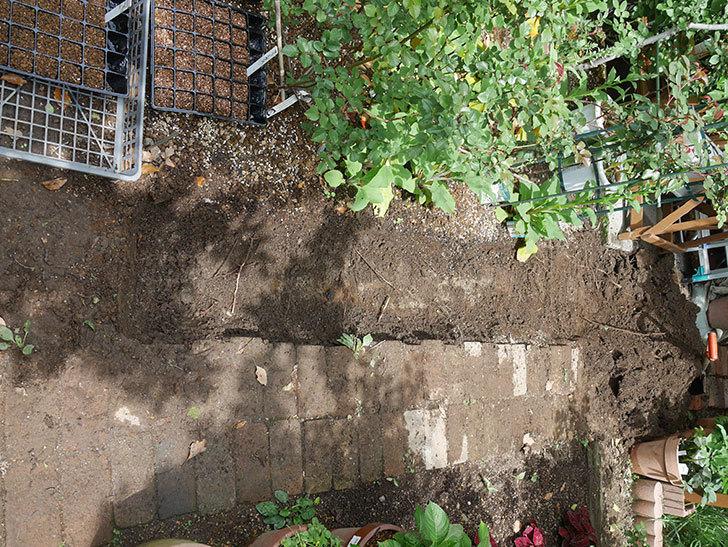 ミニトマトを地植えするために穴を30cmぐらい掘った。2020年-5.jpg