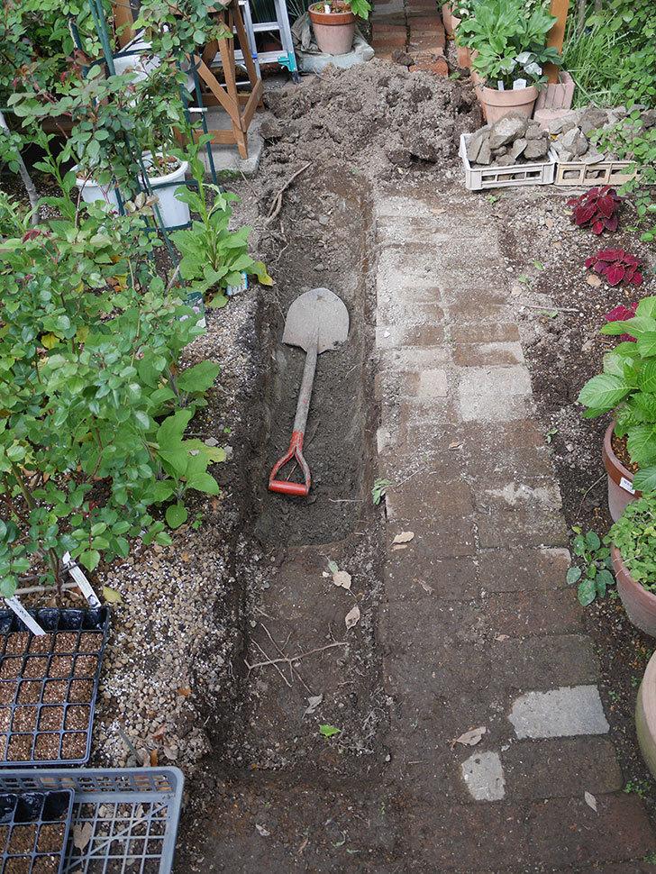 ミニトマトを地植えするために穴を30cmぐらい掘った。2020年-6.jpg