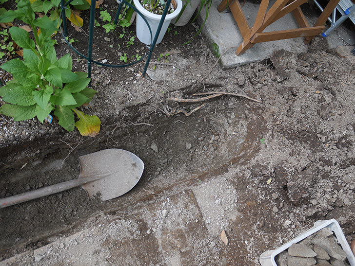 ミニトマトを地植えするために穴を30cmぐらい掘った。2020年-8.jpg