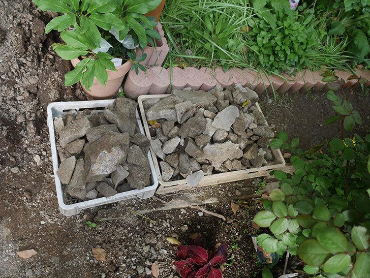 ミニトマトを地植えするために穴を30cmぐらい掘った。2020年-9.jpg