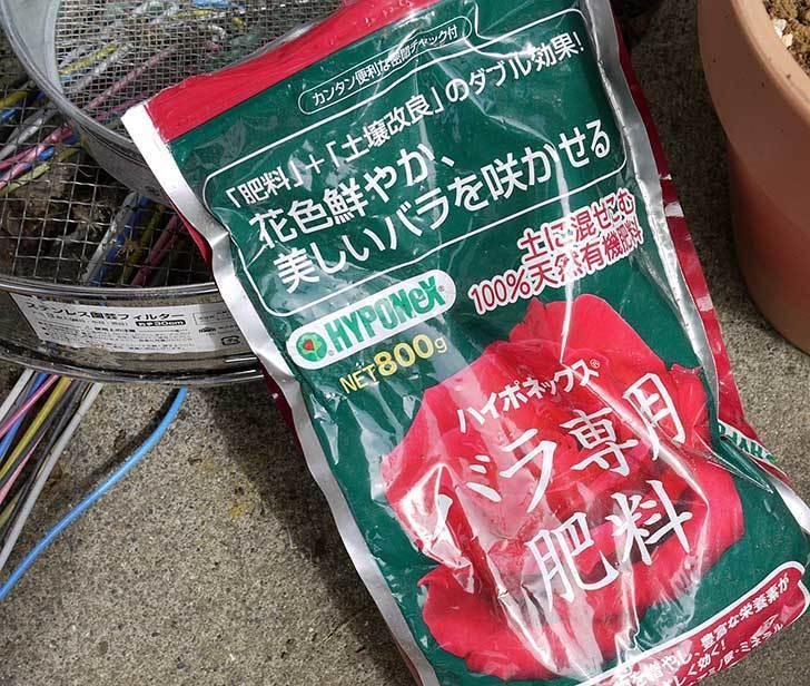 ミニバラに肥料をやった11.jpg