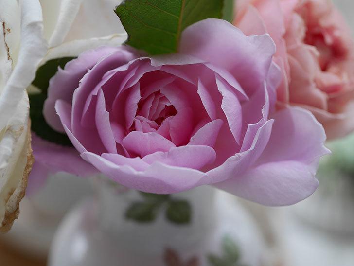 モーティマー・サックラー(ツルバラ)の秋花が咲いた。2020年-008.jpg