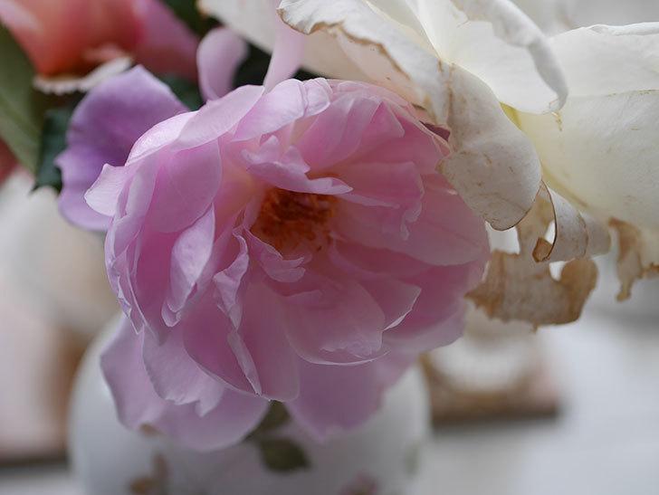 モーティマー・サックラー(ツルバラ)の秋花が咲いた。2020年-011.jpg
