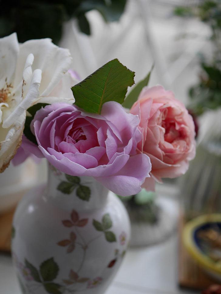 モーティマー・サックラー(ツルバラ)の秋花が咲いた。2020年-014.jpg