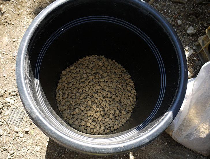 モーティマー・サックラー(ツルバラ)を鉢に植えた。2017年-2.jpg