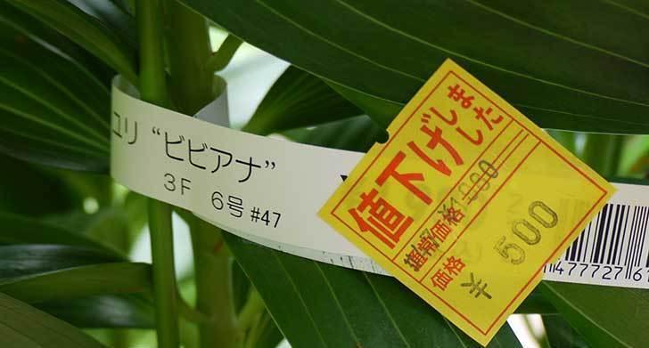 ユリ-ビビアナがホームズで500円だったので買って来た6.jpg