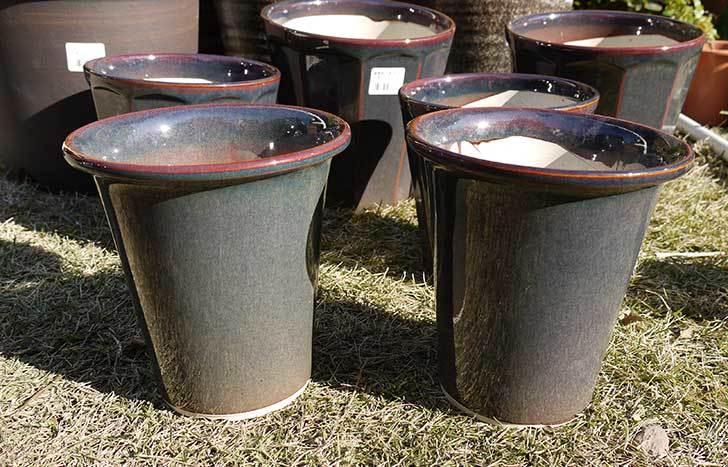 ラン鉢-こげ茶5号を2個、ケイヨーデイツーで買って来た1.jpg