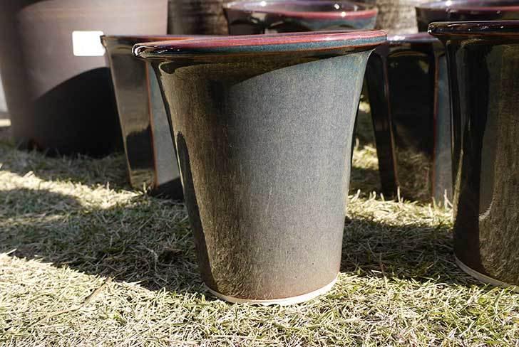 ラン鉢-こげ茶5号を2個、ケイヨーデイツーで買って来た3.jpg