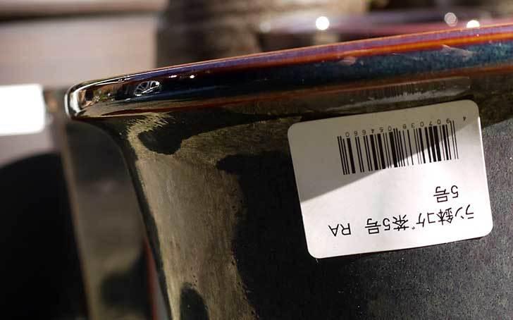 ラン鉢-こげ茶5号を2個、ケイヨーデイツーで買って来た5.jpg