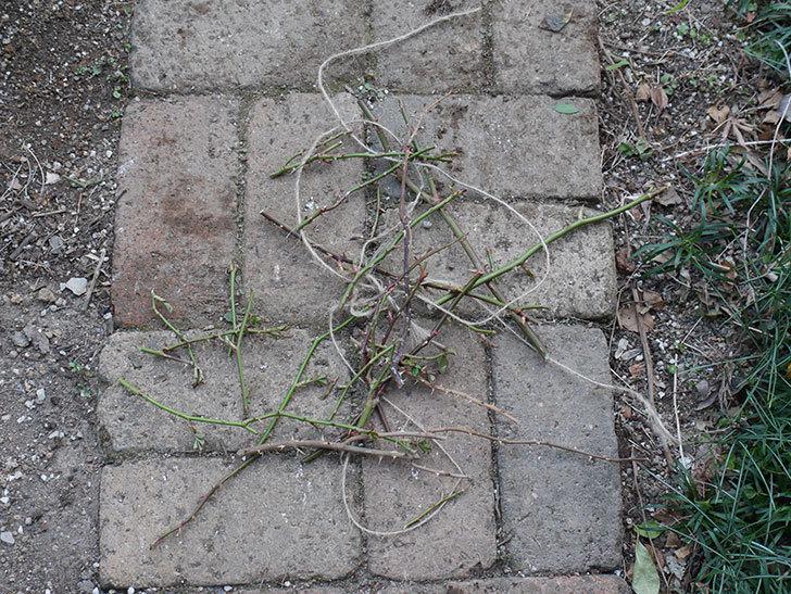 ラ・ドルチェ・ヴィータ(La Dolce Vita)の冬剪定をした。木立バラ。2021年-008.jpg