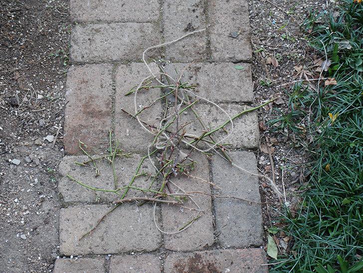 ラ・ドルチェ・ヴィータ(La Dolce Vita)の冬剪定をした。木立バラ。2021年-010.jpg