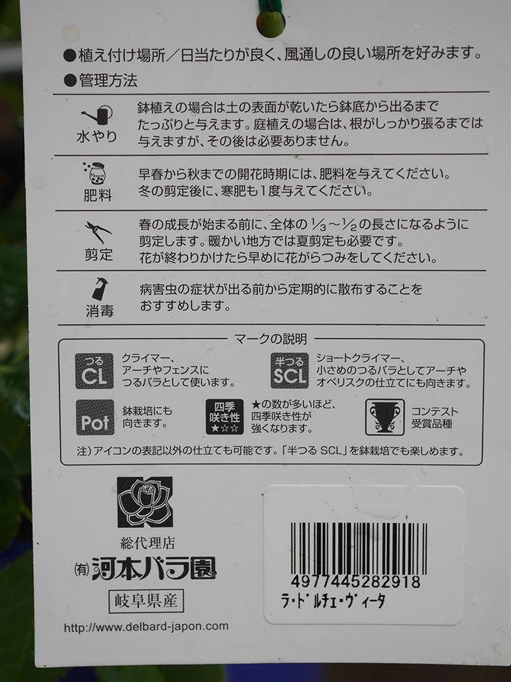 ラ・ドルチェ・ヴィータ(La Dolce Vita)の大苗(鉢植え苗)を買った。2020年-007.jpg