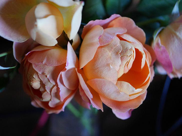 ラ・ドルチェ・ヴィータ(La Dolce Vita)の秋花を切り花にした。木立バラ。2020年-001.jpg