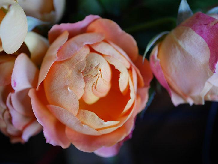ラ・ドルチェ・ヴィータ(La Dolce Vita)の秋花を切り花にした。木立バラ。2020年-002.jpg