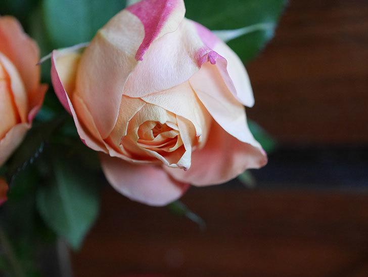 ラ・ドルチェ・ヴィータ(La Dolce Vita)の秋花を切り花にした。木立バラ。2020年-009.jpg