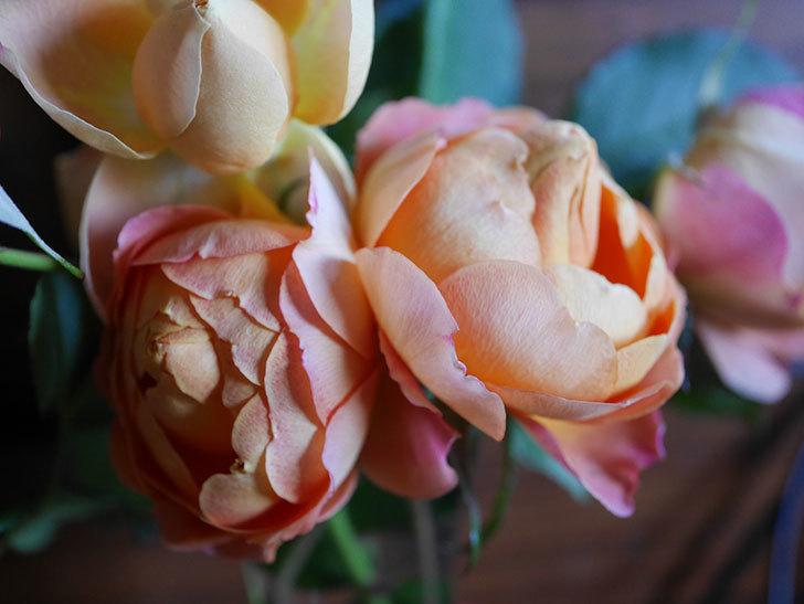 ラ・ドルチェ・ヴィータ(La Dolce Vita)の秋花を切り花にした。木立バラ。2020年-012.jpg
