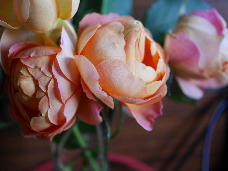 ラ・ドルチェ・ヴィータ(La Dolce Vita)の秋花を切り花にした。木立バラ。2020年-013.jpg