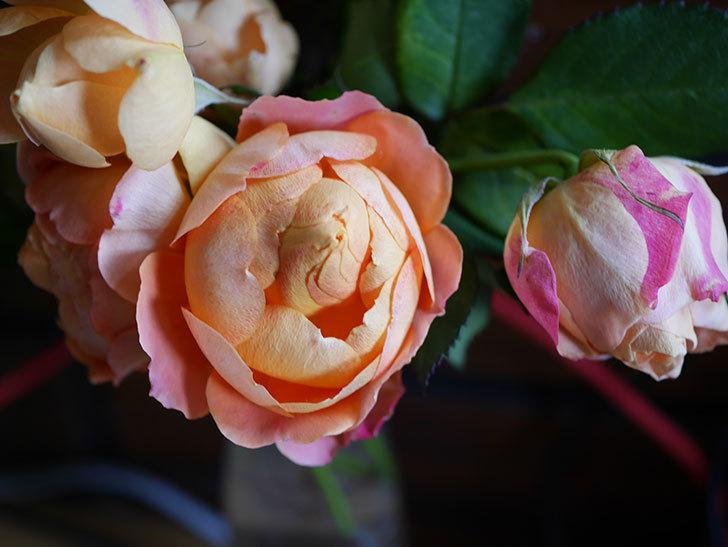 ラ・ドルチェ・ヴィータ(La Dolce Vita)の秋花を切り花にした。木立バラ。2020年-014.jpg