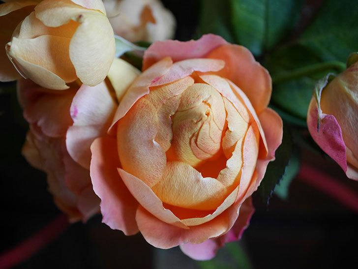 ラ・ドルチェ・ヴィータ(La Dolce Vita)の秋花を切り花にした。木立バラ。2020年-015.jpg