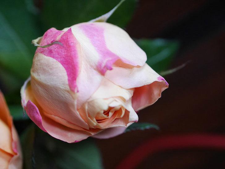 ラ・ドルチェ・ヴィータ(La Dolce Vita)の秋花を切り花にした。木立バラ。2020年-016.jpg