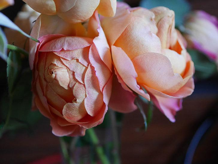 ラ・ドルチェ・ヴィータ(La Dolce Vita)の秋花を切り花にした。木立バラ。2020年-021.jpg