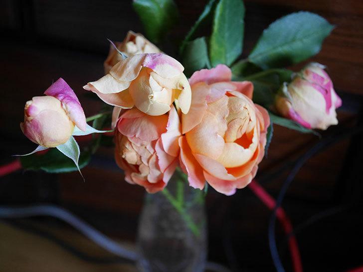 ラ・ドルチェ・ヴィータ(La Dolce Vita)の秋花を切り花にした。木立バラ。2020年-023.jpg