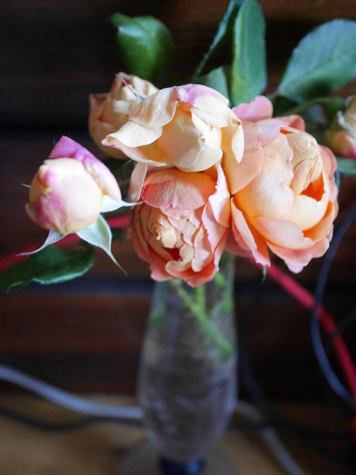 ラ・ドルチェ・ヴィータ(La Dolce Vita)の秋花を切り花にした。木立バラ。2020年-024.jpg