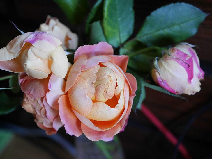 ラ・ドルチェ・ヴィータ(La Dolce Vita)の秋花を切り花にした。木立バラ。2020年-025.jpg
