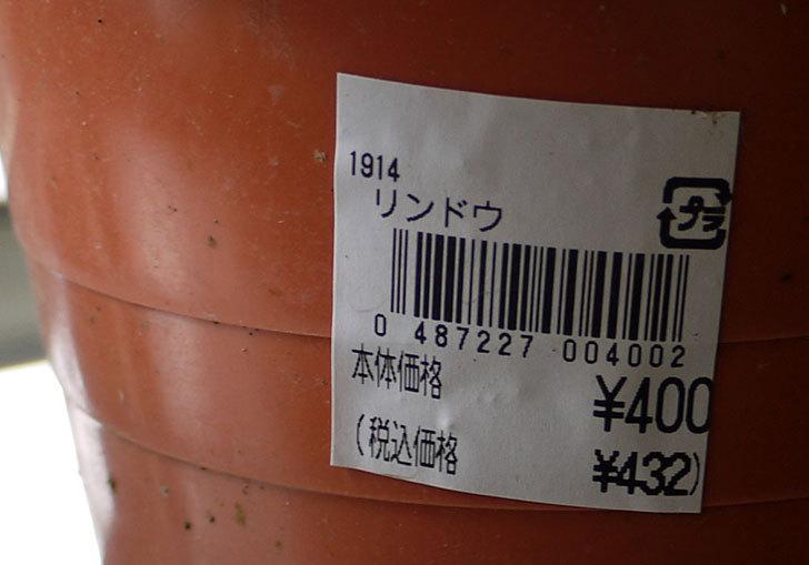 リンドウを買って来た5.jpg