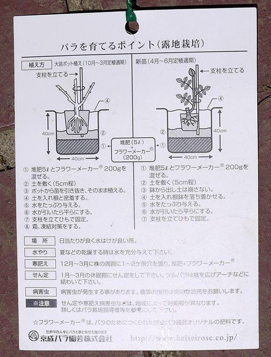レイニーブルー(ツルバラ)の新苗をケイヨーデイツーで買って来た。2016年-4.jpg