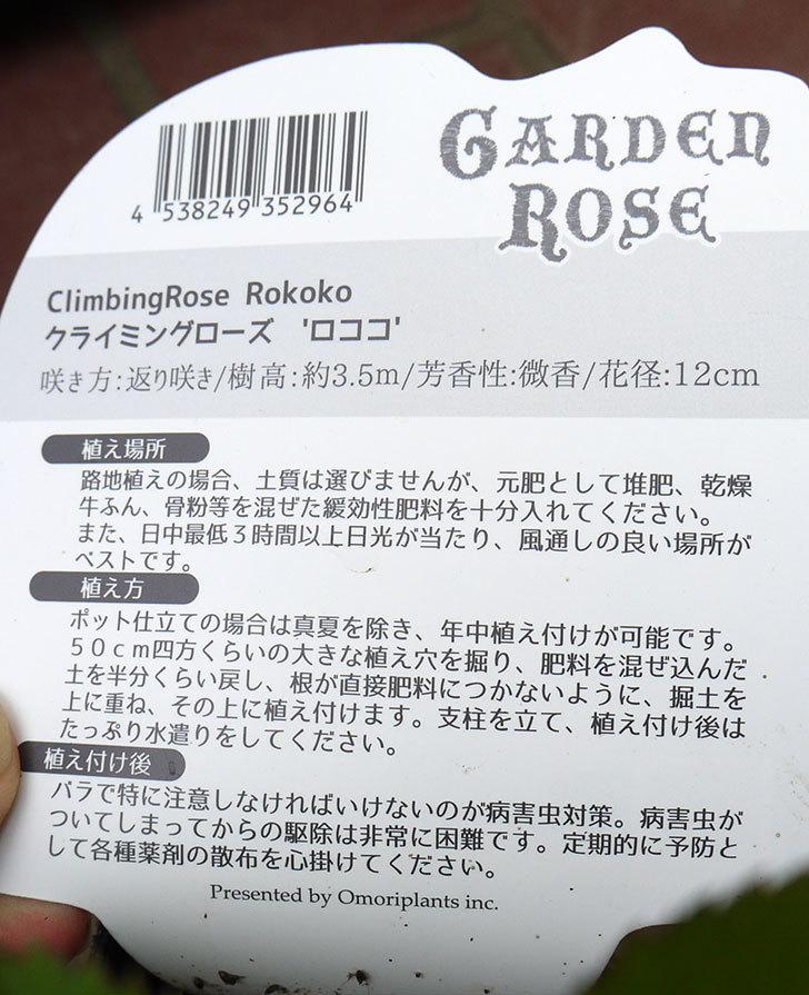 ロココ(ツルバラ)の新苗がケイヨーデイツーで398円だったので買って来た。2016年-5.jpg