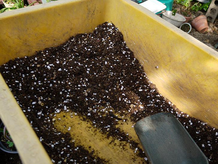 ローズマリーをスリット鉢に植え替えた。2016年-7.jpg