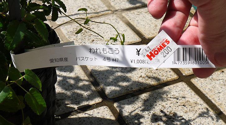 ワレモコウがホームズで200円だったので買った4.jpg