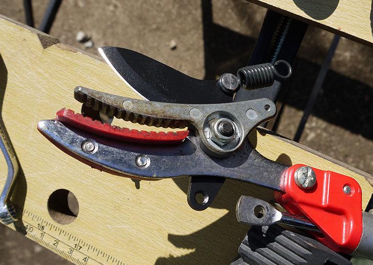 伸縮式高枝鋏ズ―ムチョキKタイプ-アンビルタイプ-つかみ付替刃-184-2を取り付けた9.jpg