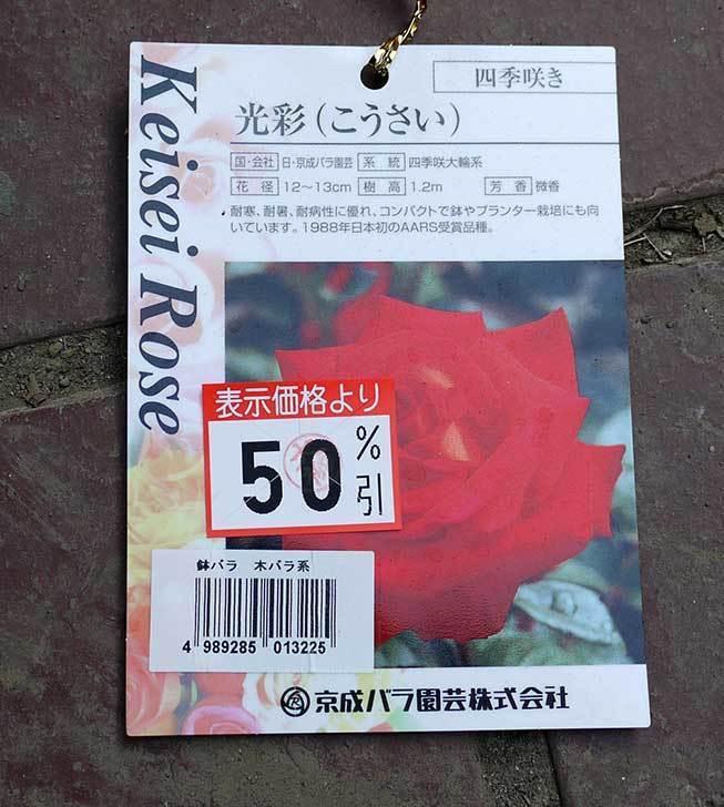 光彩(バラ)がケイヨーデイツーで半額だったので買って来た4.jpg