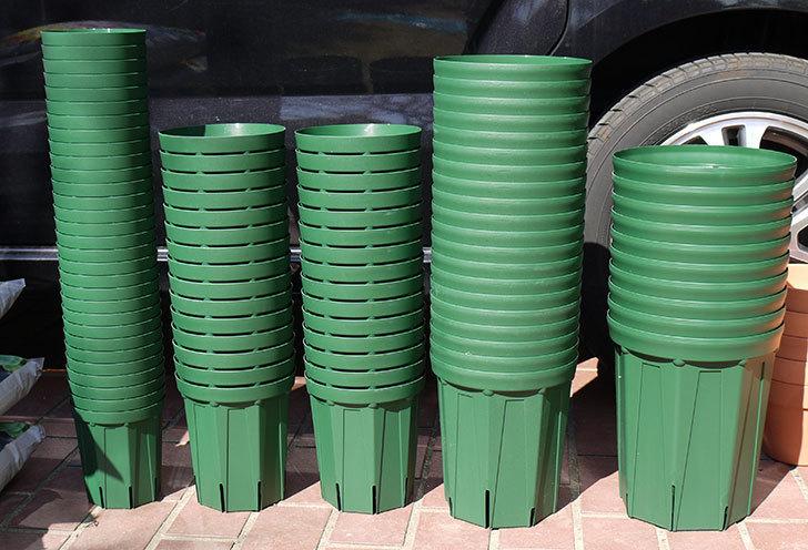 兼弥スリット鉢-4、5、6、7号ロングタイプを楽天の所沢植木鉢センターで大量買いした1.jpg