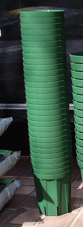 兼弥スリット鉢-4、5、6、7号ロングタイプを楽天の所沢植木鉢センターで大量買いした2.jpg