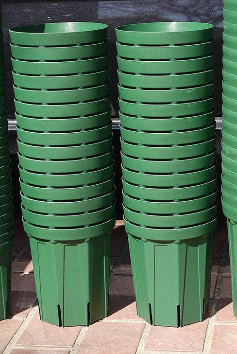 兼弥スリット鉢-4、5、6、7号ロングタイプを楽天の所沢植木鉢センターで大量買いした3.jpg