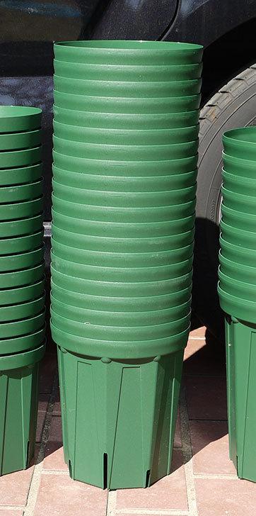 兼弥スリット鉢-4、5、6、7号ロングタイプを楽天の所沢植木鉢センターで大量買いした4.jpg