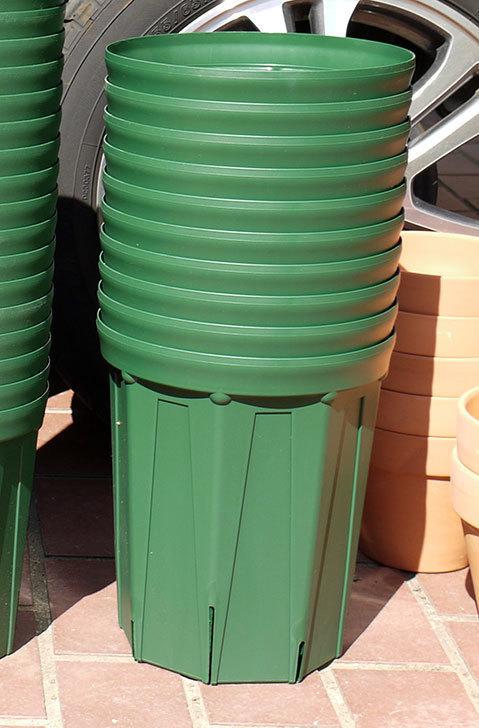 兼弥スリット鉢-4、5、6、7号ロングタイプを楽天の所沢植木鉢センターで大量買いした5.jpg